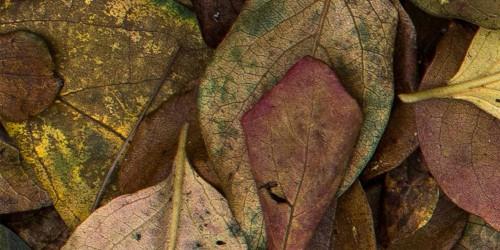 foglie_dettaglio